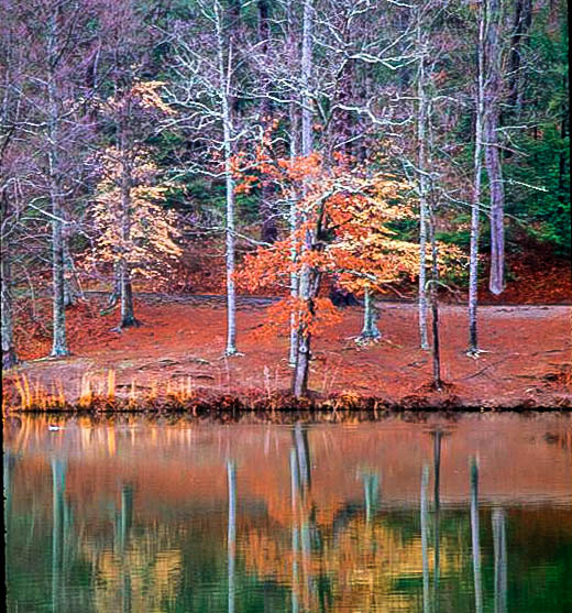 Reflections at the Great Smokey Mountains