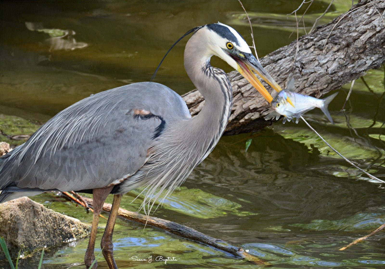 Catching A Meal