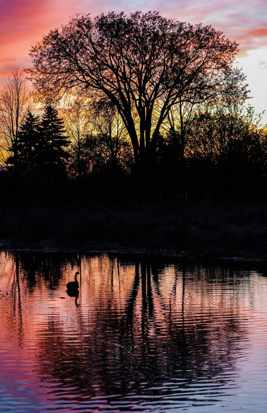 Evening at the Pond