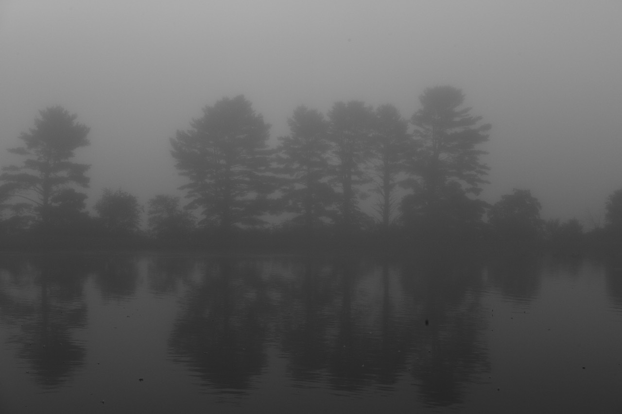 Trees against the mist