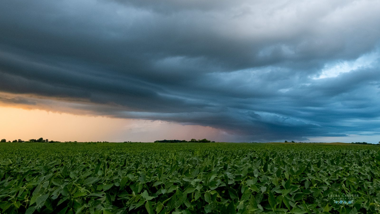 Stormy Summer Sky Over Illinois Soybeans