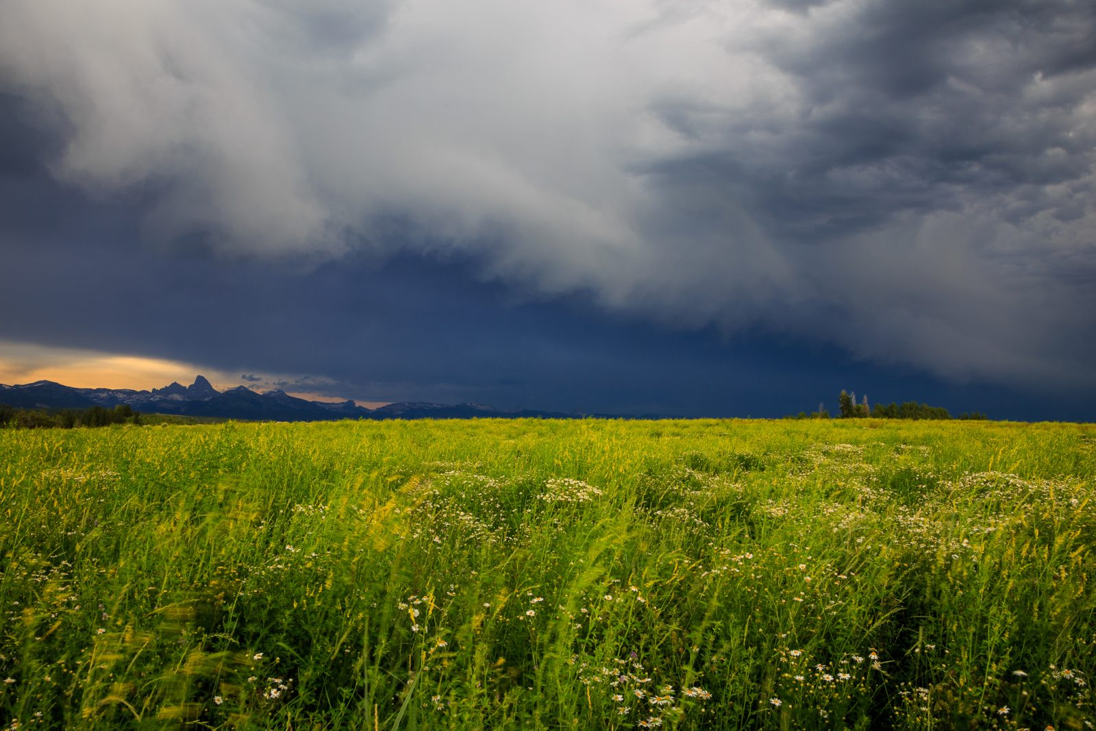 Summer Rain For The Dry Farms Of Teton Valley
