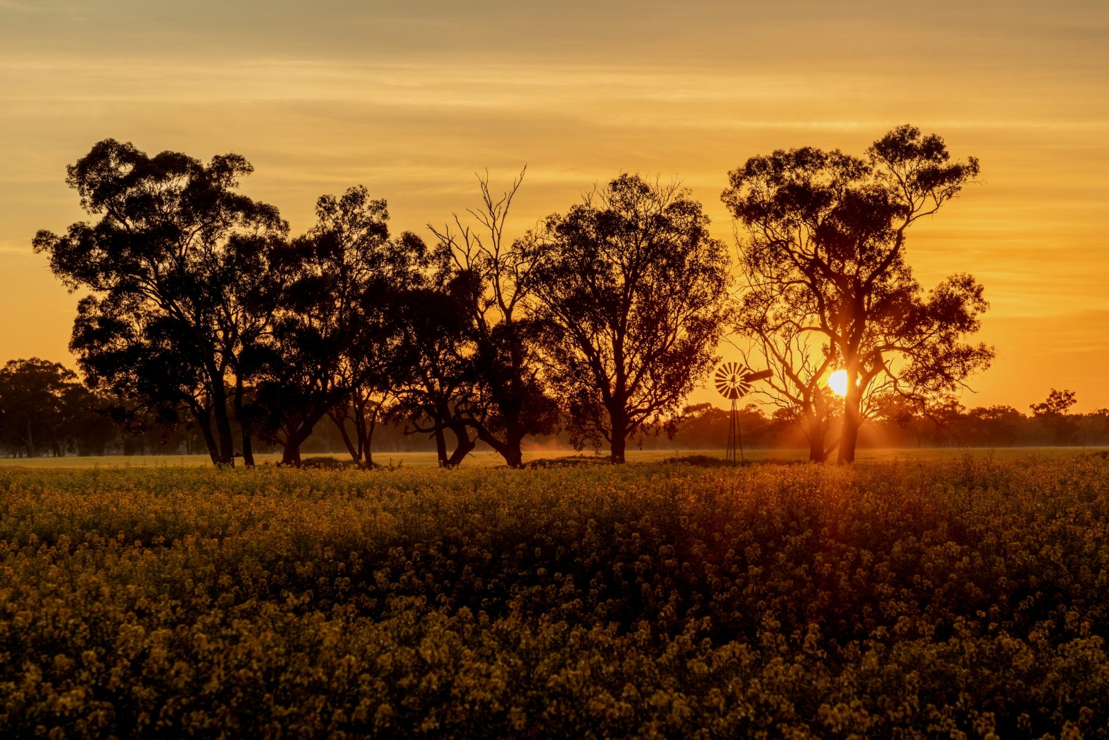 A Sunburnt Country