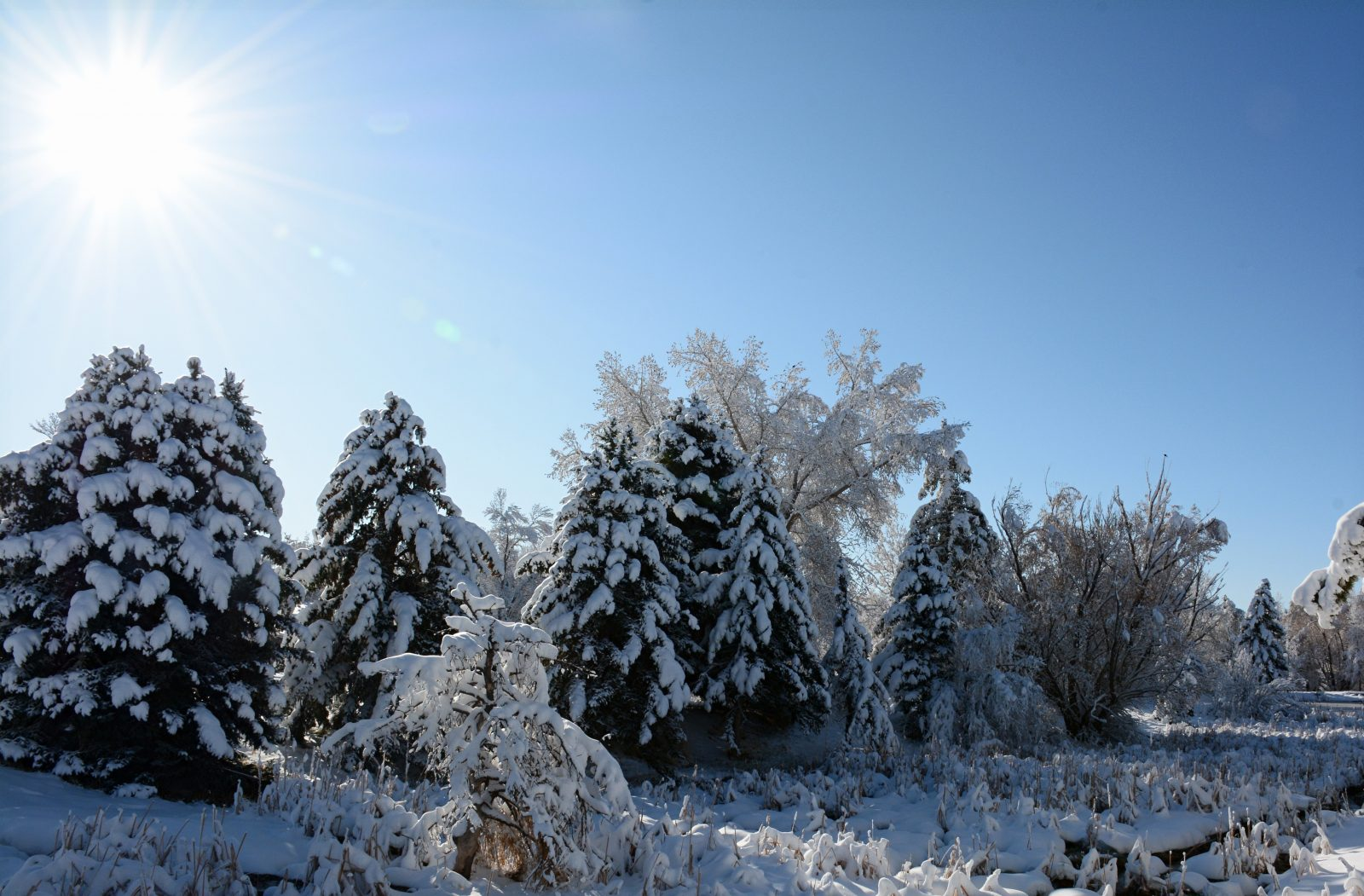 Sunny Morning In The Snow