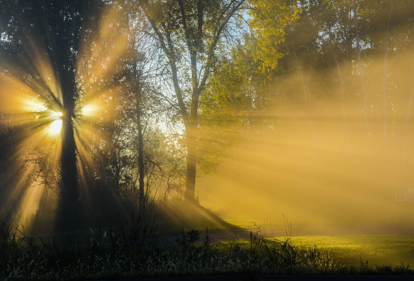 Rays of Light Through the Fog