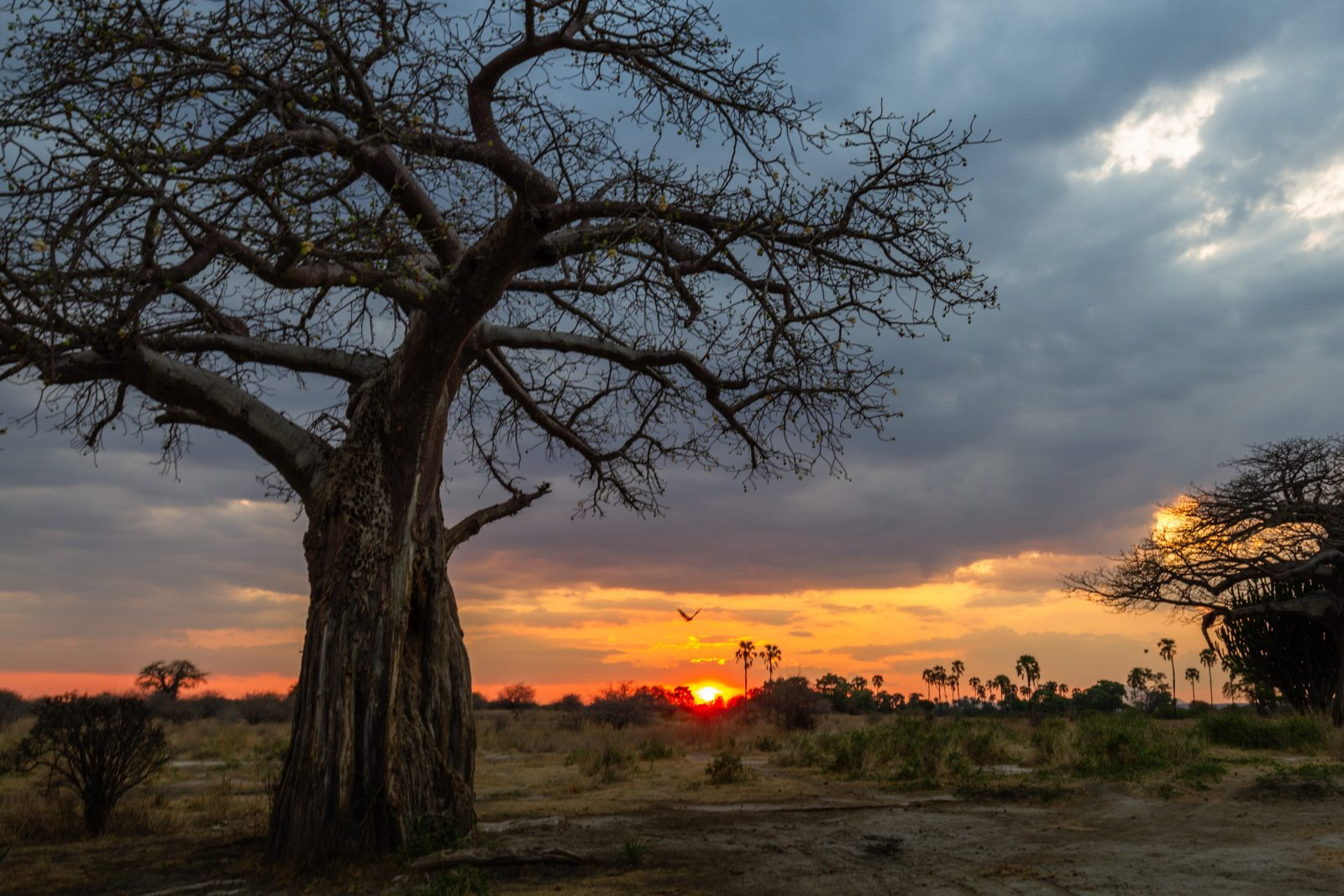 Primeval Sunset in Ruaha National Park