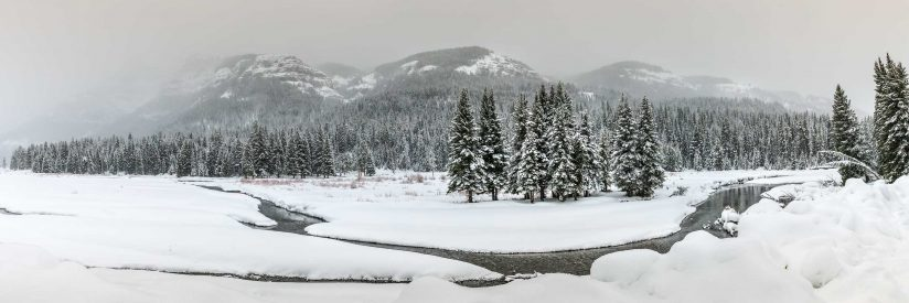 Scenic view in Lamar Valley