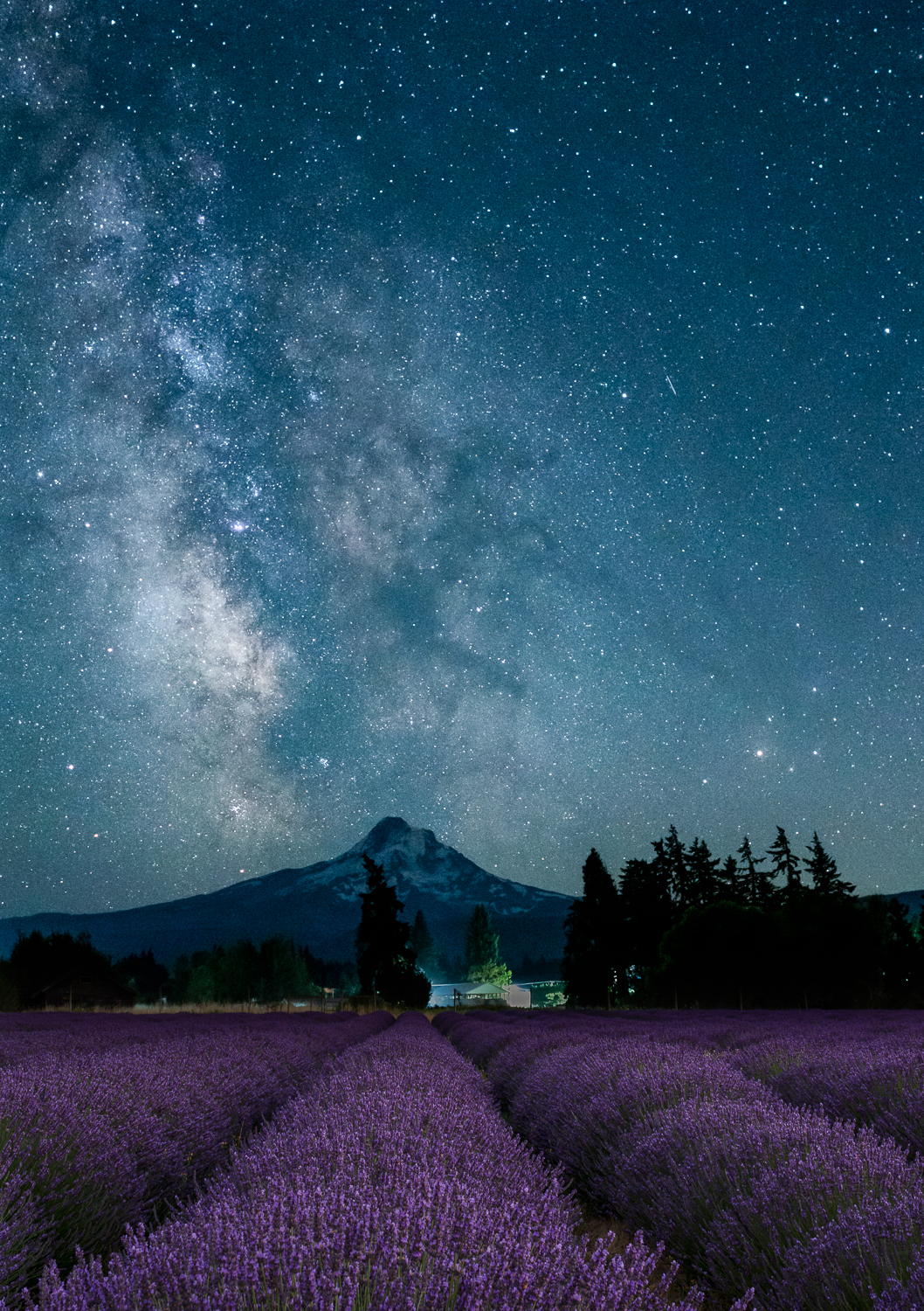 Milky Way over Mt Hood and Lavender Valley