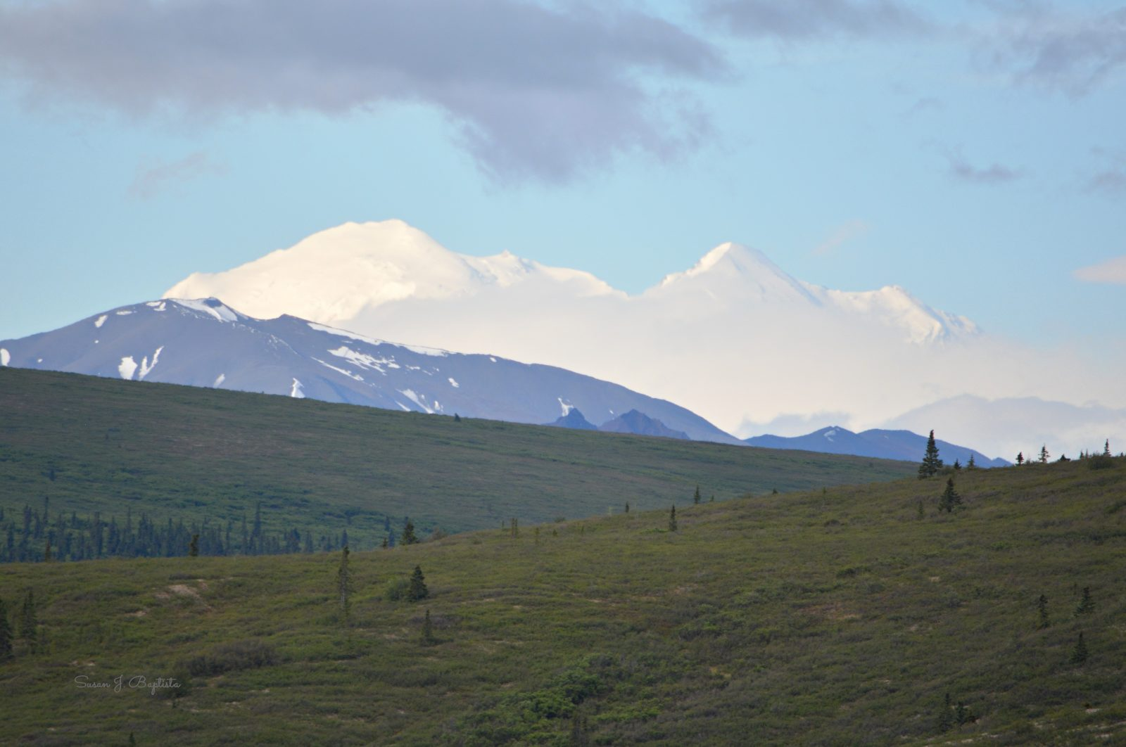 Early Summer In Denali National Park