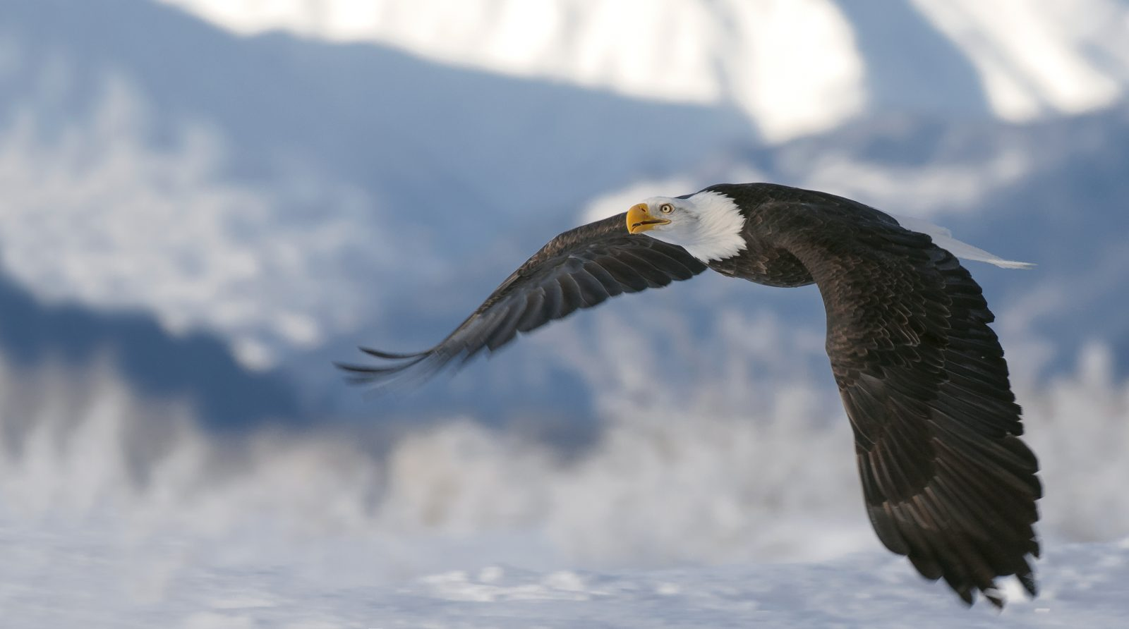 Eagle Fly-by