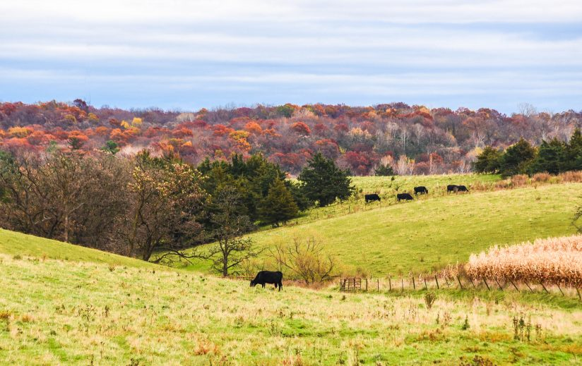 Fall on the Pasture
