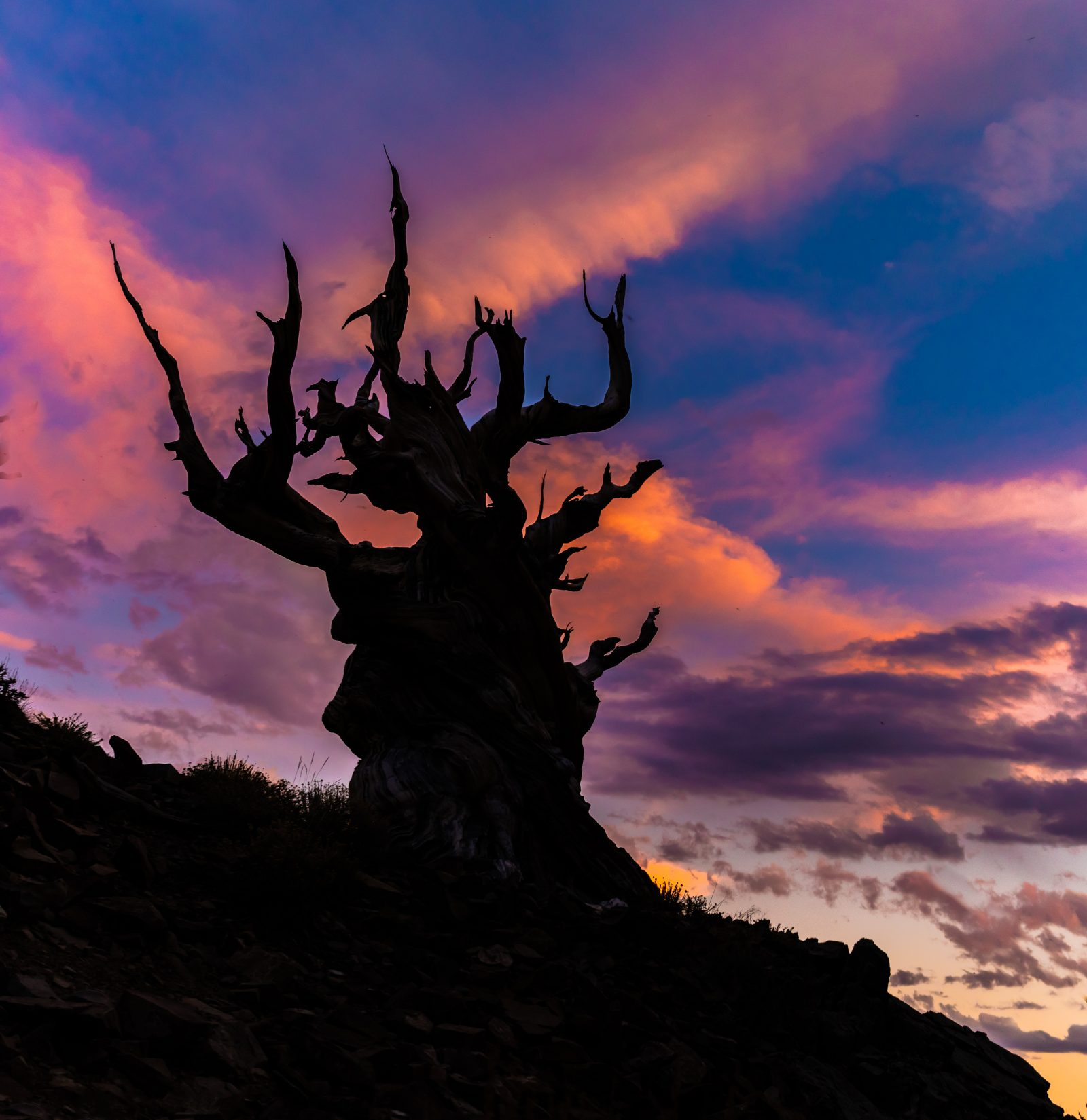 Summer Sunset in The Bristlecone Pine Forest