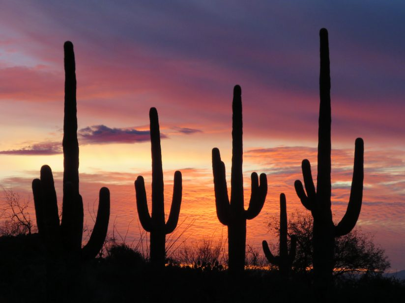 Classic Southwest Silhouette