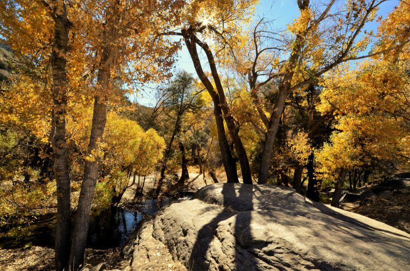 Fall Colors Along Brush Creek