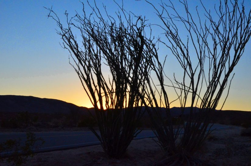 Ocotillo Sunset