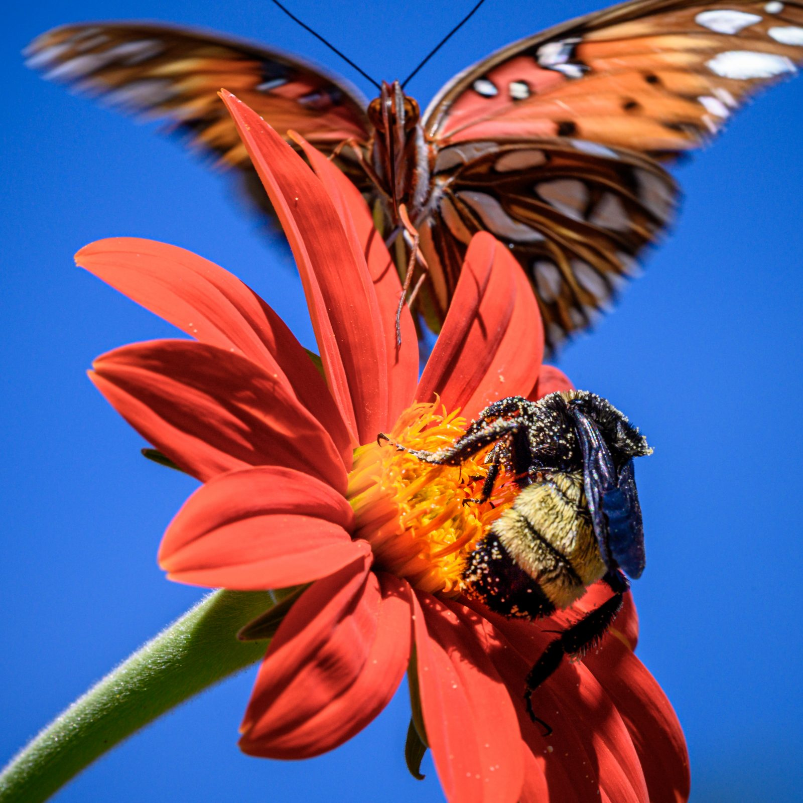Butterfly Photo Bomb