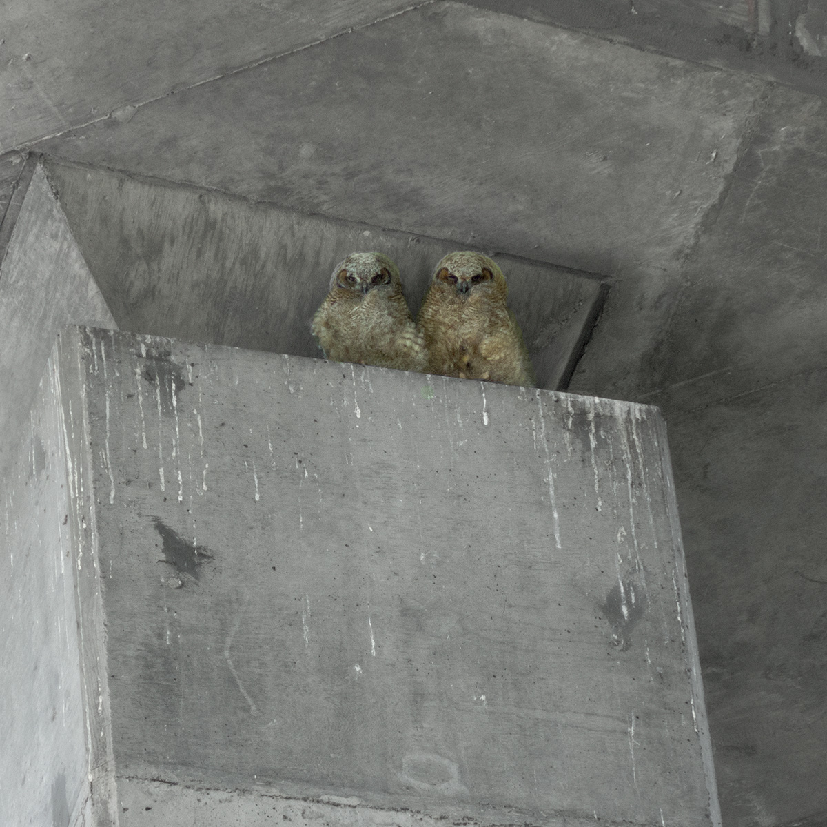 Waiting to Fledge