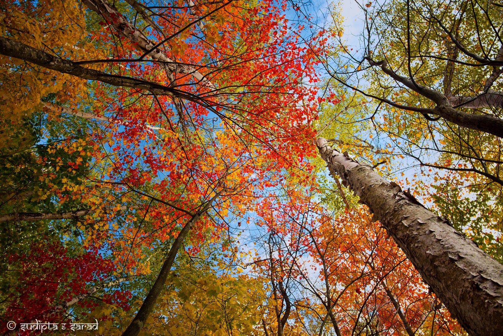 When the leaves turn…