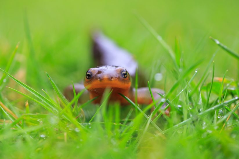Got To Get Low For The Newt