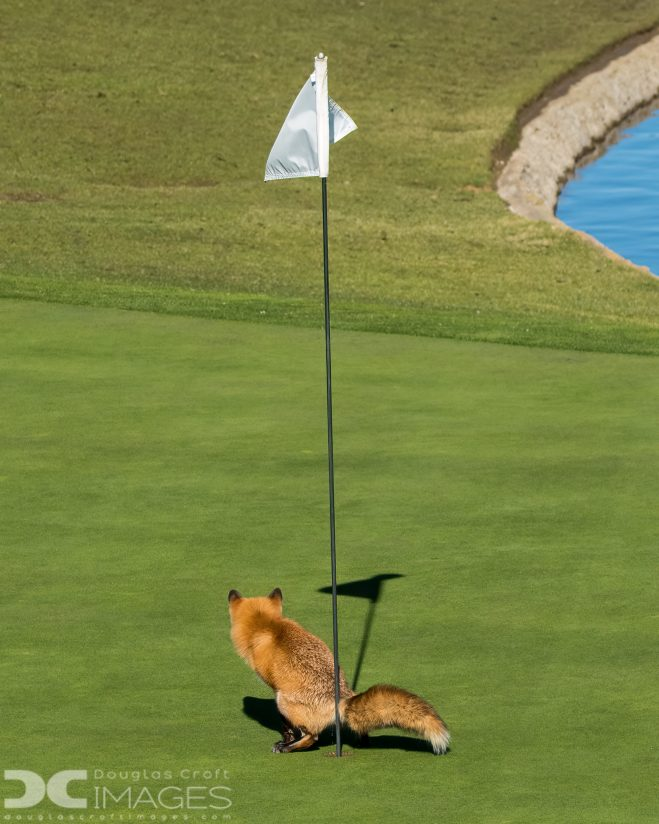 Must Have Three-putted