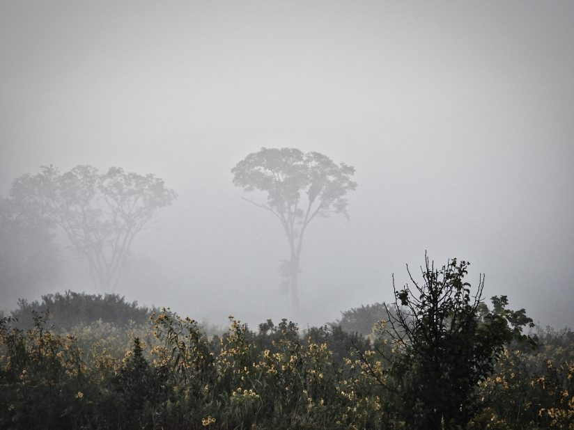Foggy Morning Reveals Two Trees on a Prairie
