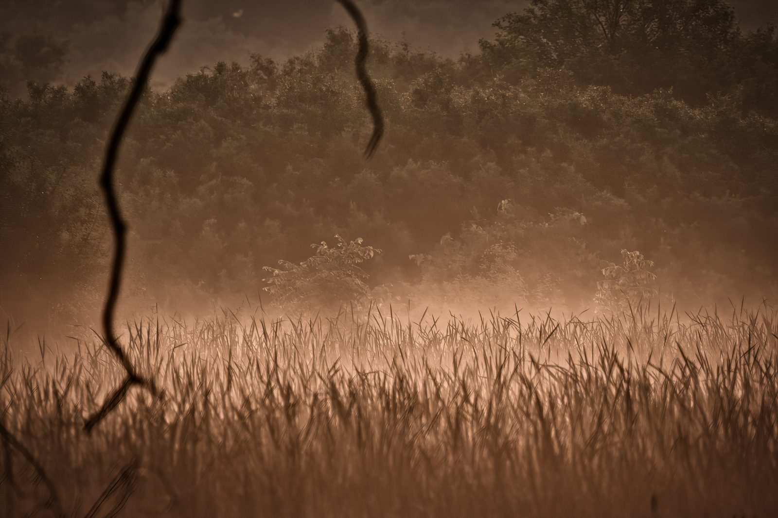 Wetland at Sunrise with Cattails and High Grass
