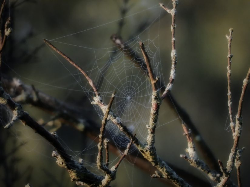 Spider Web on Bare Tree Branches at Sunrise