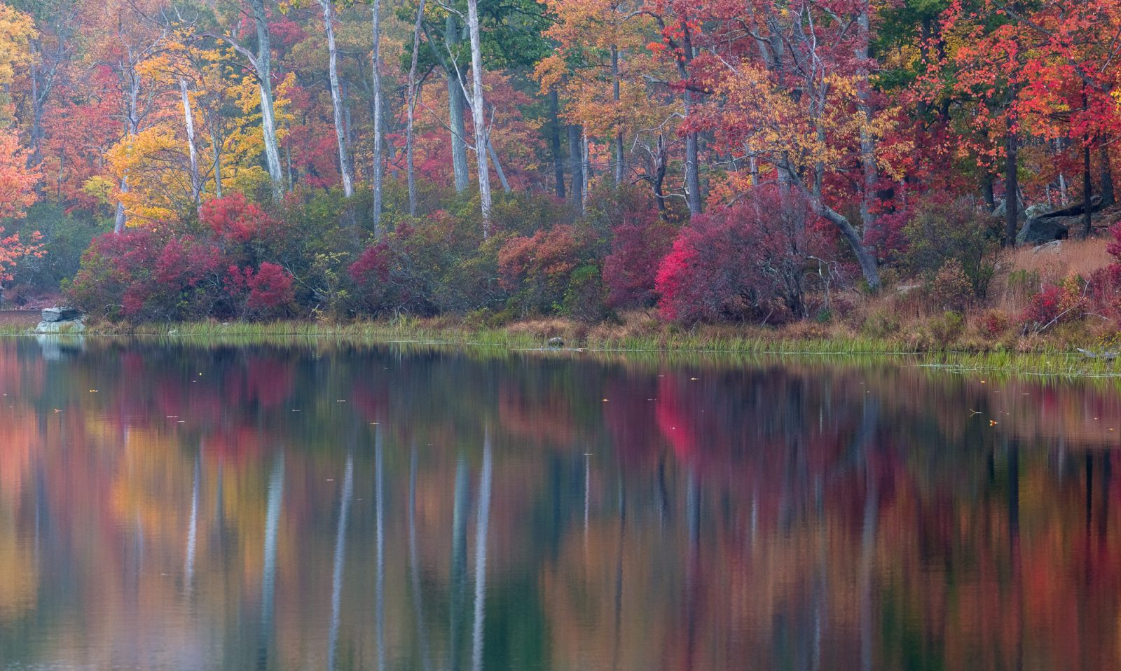 Reflections of the Fall