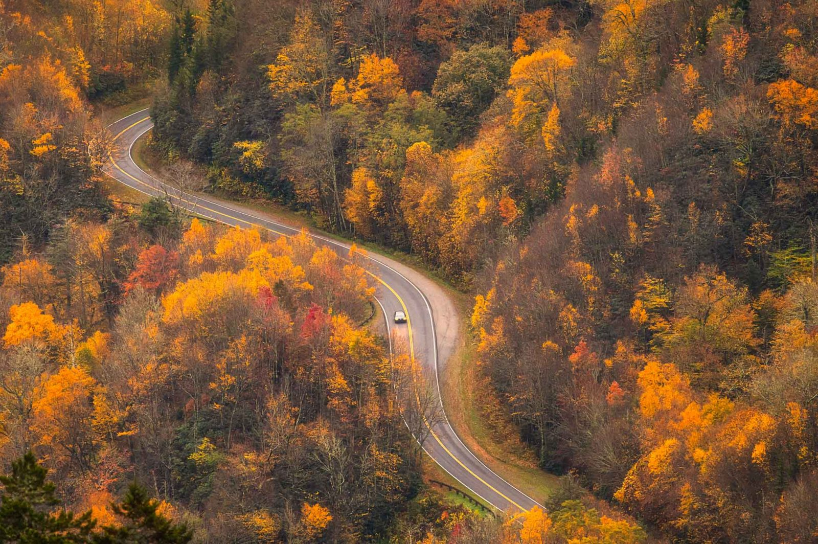 Winding through Autumn