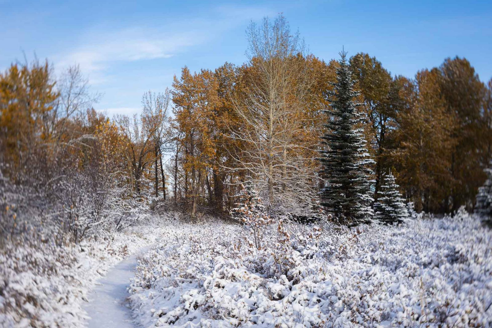 Fresh Snow over Fall Colours