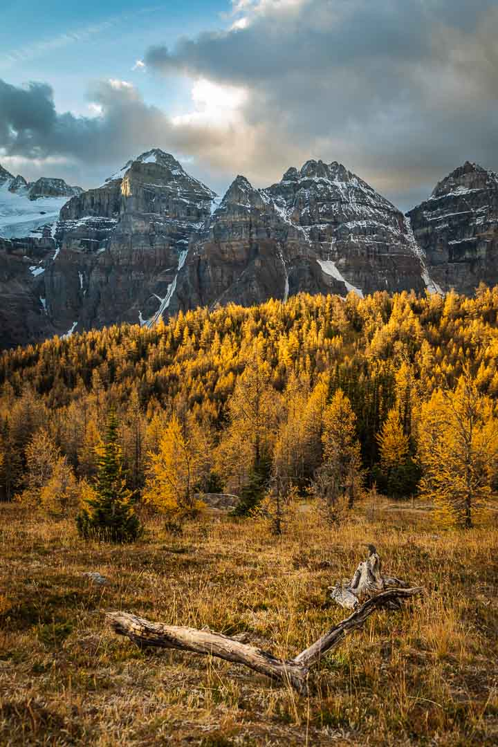 Larches and Peaks