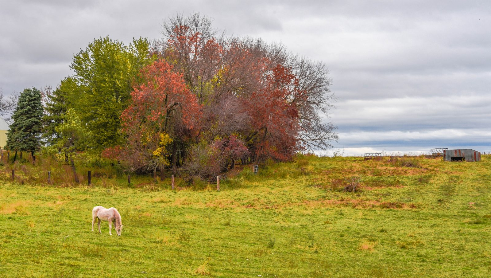 Pasture in the Fall