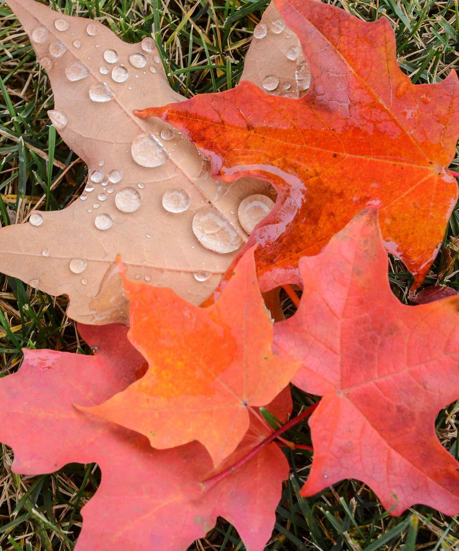 Fallen Leaves After the Rain