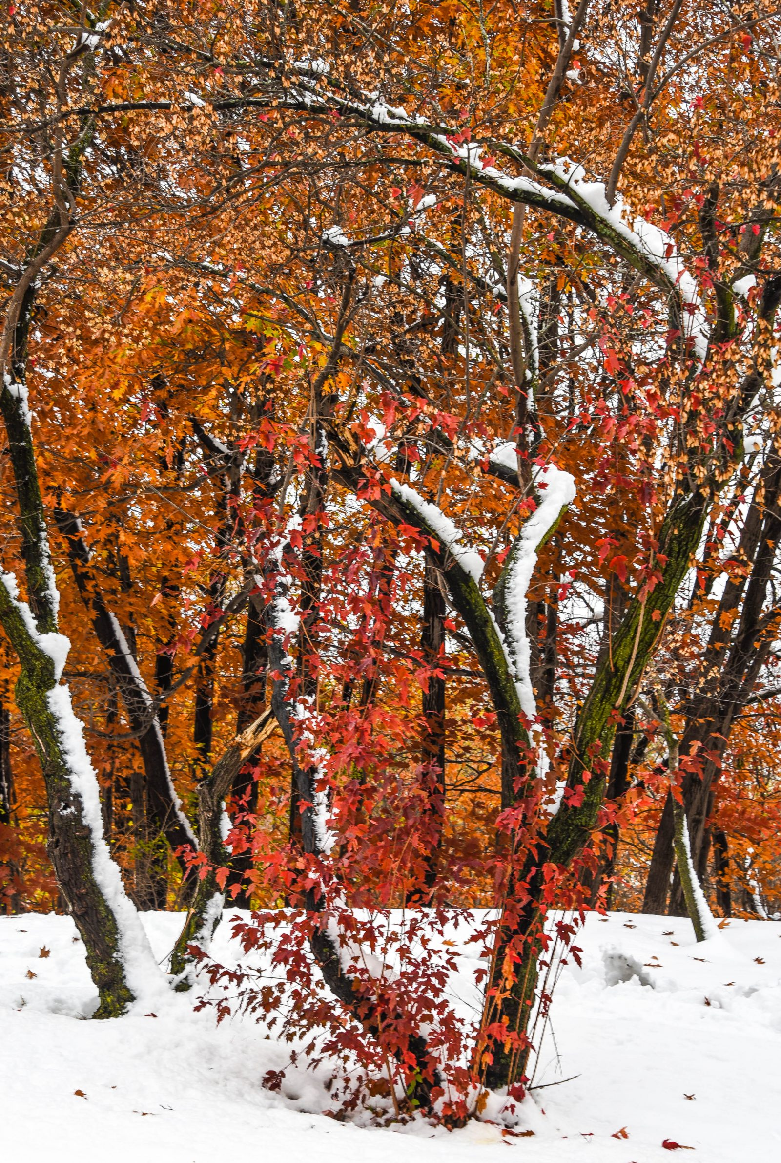 Shades of Fall Color