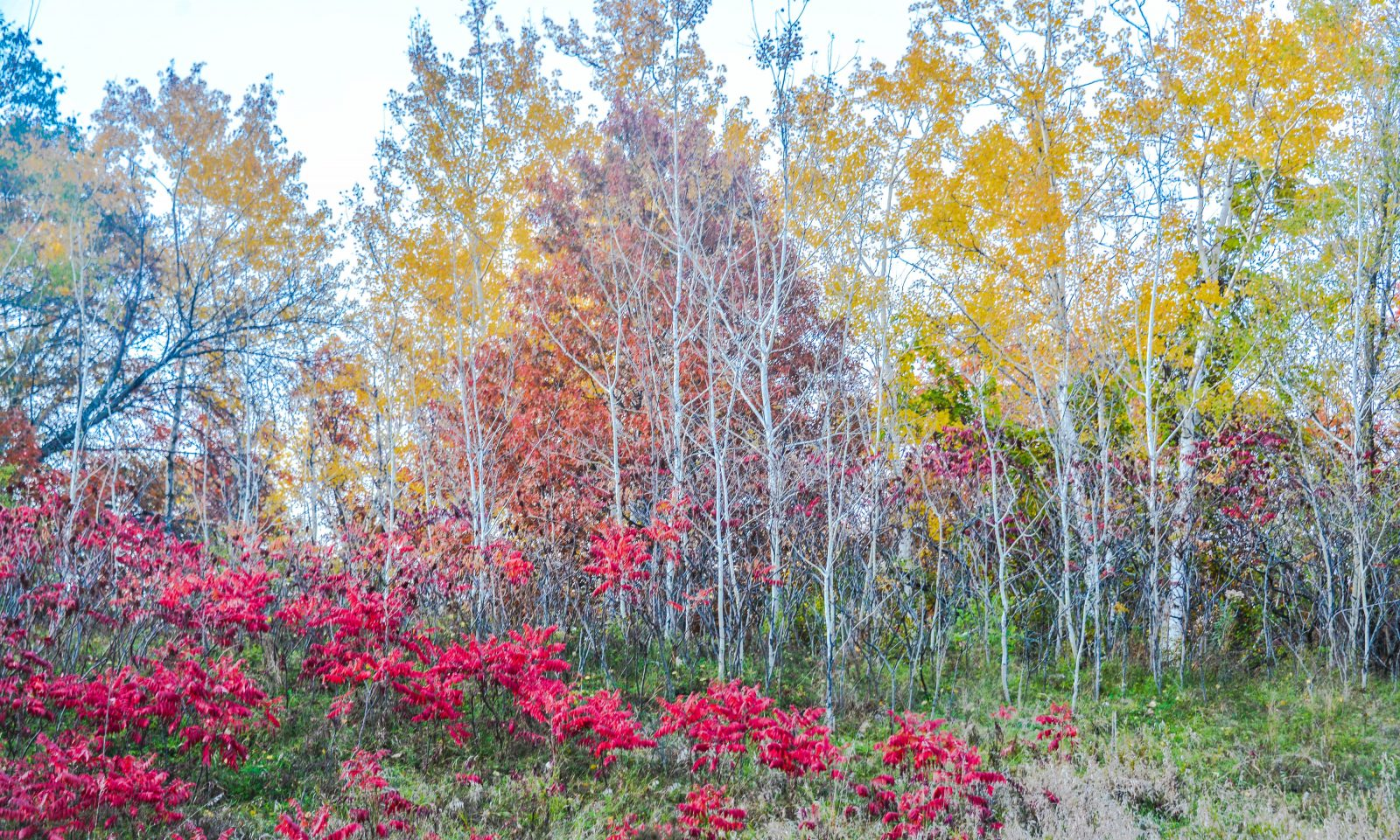 The Colors of Fall in Minnesota