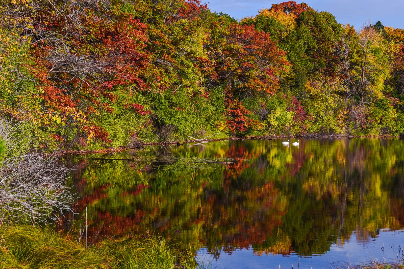 Fall Color on the Pond