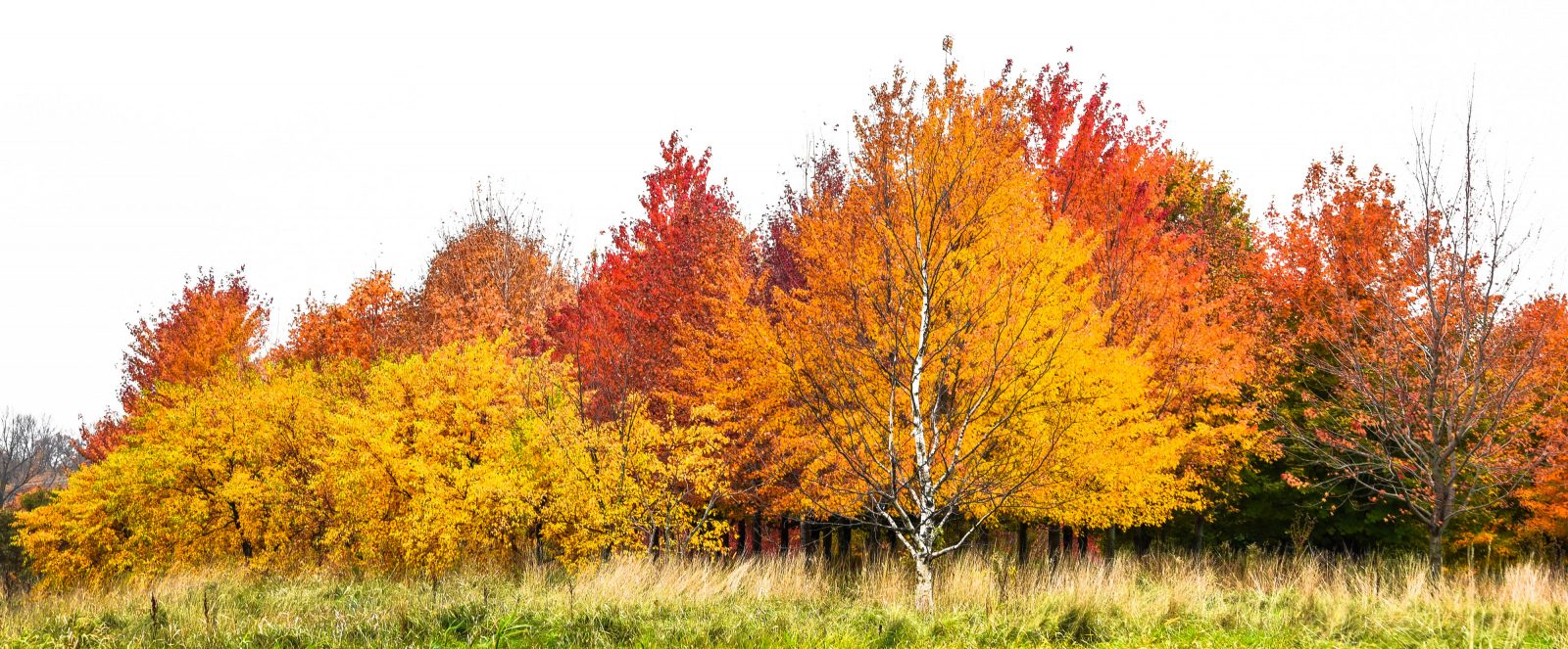 Fall Color at the Minnesota Arboretum