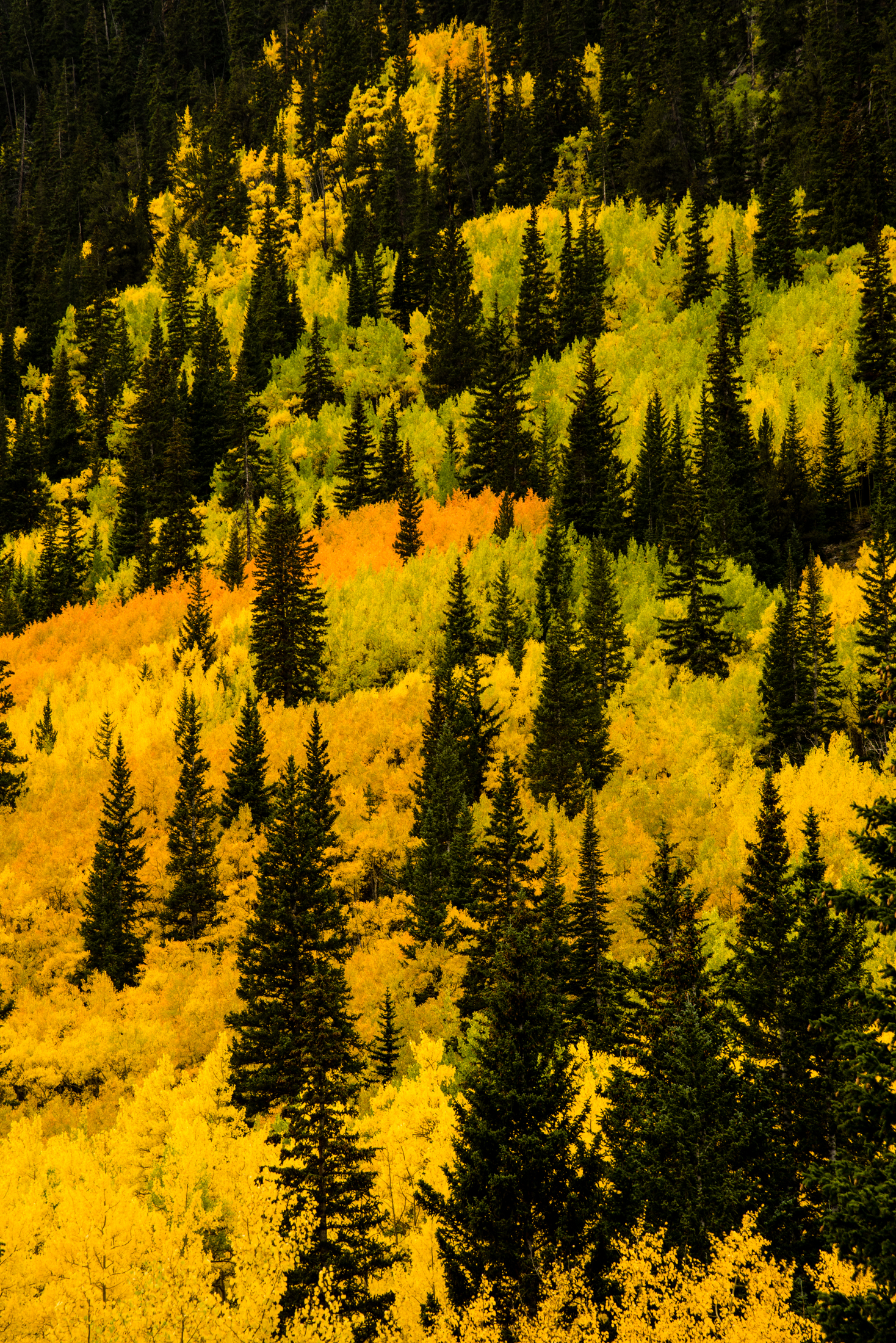 Fall Color Mix with Aspens