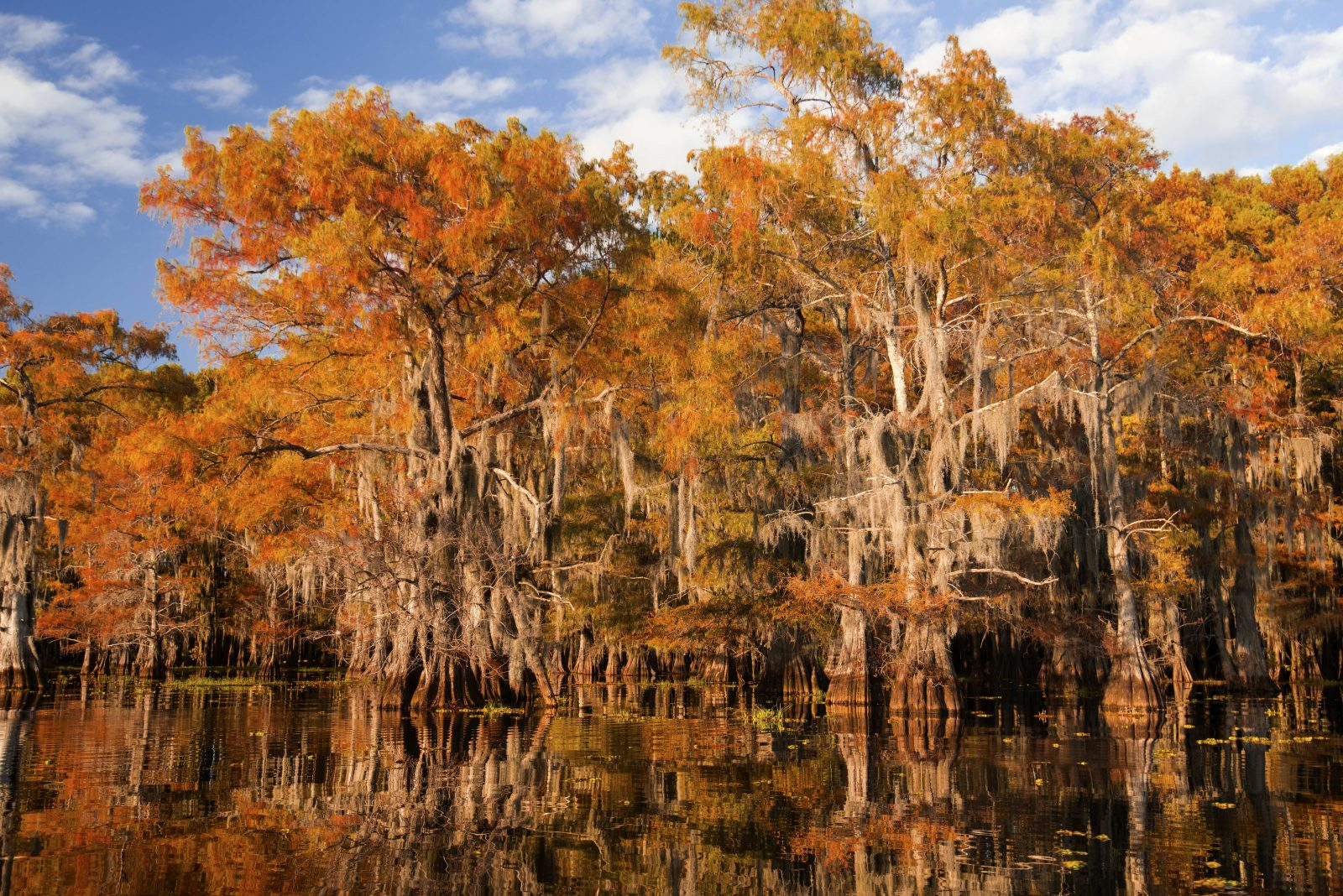 Fall Colors among the Spanish Moss