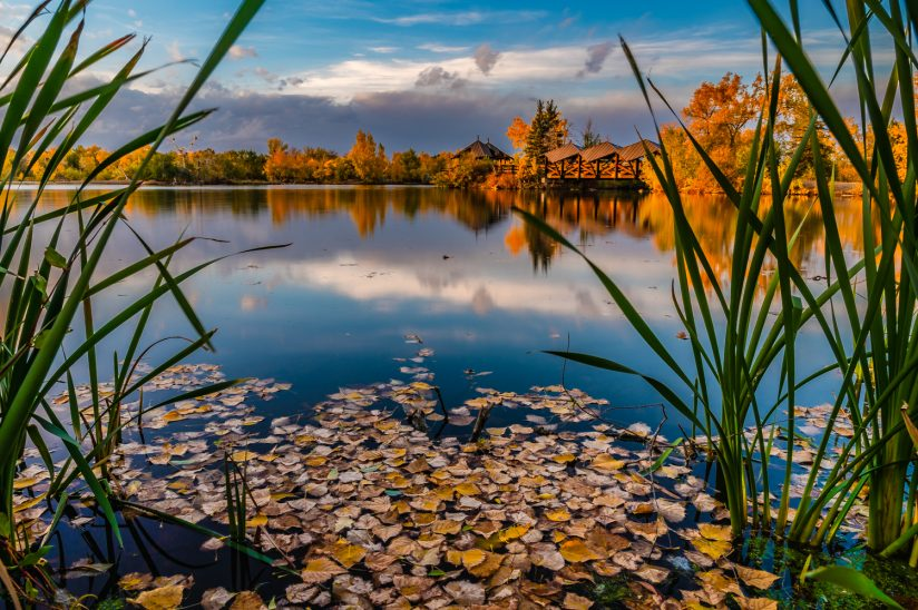 Leaves of the Lake