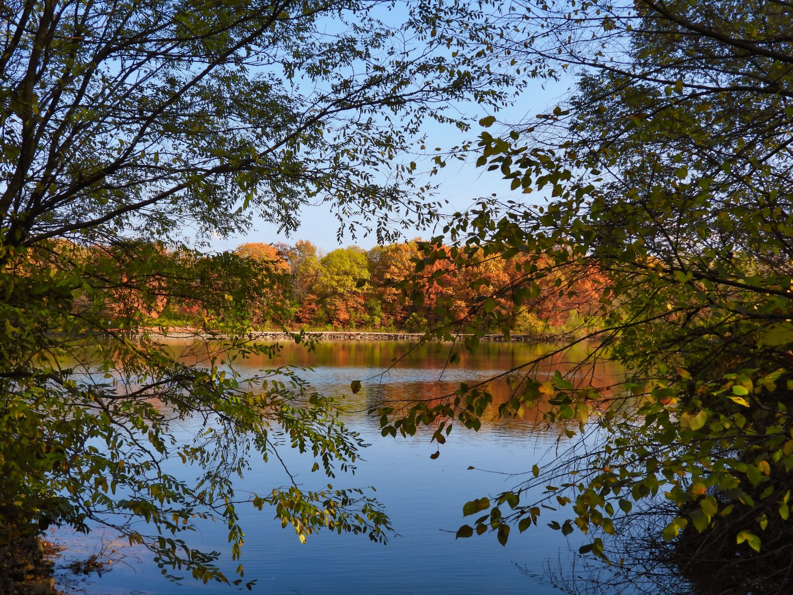 Framed Fall Landscape View of Various Autumn Colored Trees Across a Lake with Reflection of Yellow, Orange, Red, Brown and Green Tree Leaves in Water Bright Blue Sky Calm Tranquil Scene