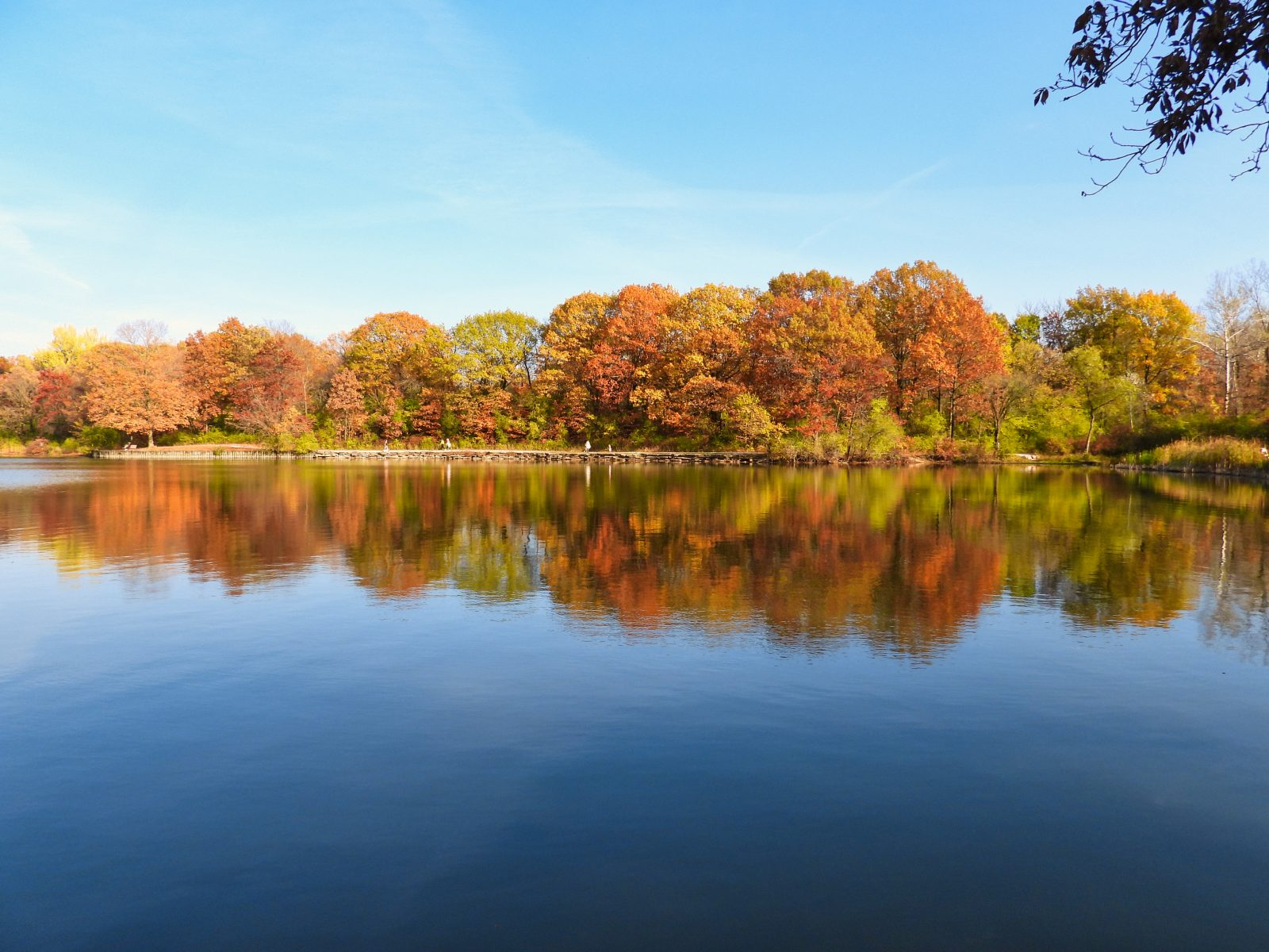 Fall Trees Line Lake Edge in Beautiful Autumn Colors of Orange, Yellow, Red, Brown and Green Reflect in Water on a Beautiful Late Fall Day at Park in Landscape View Scenic Calm Tranquil Pretty
