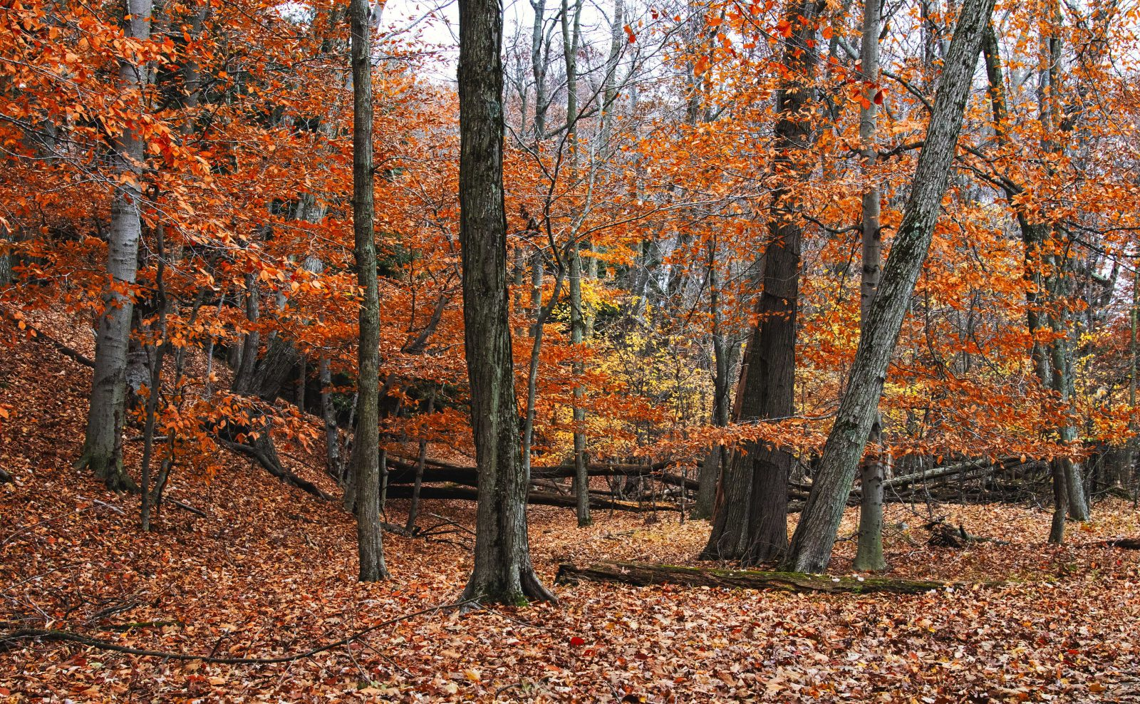 Late Autumn Forest View