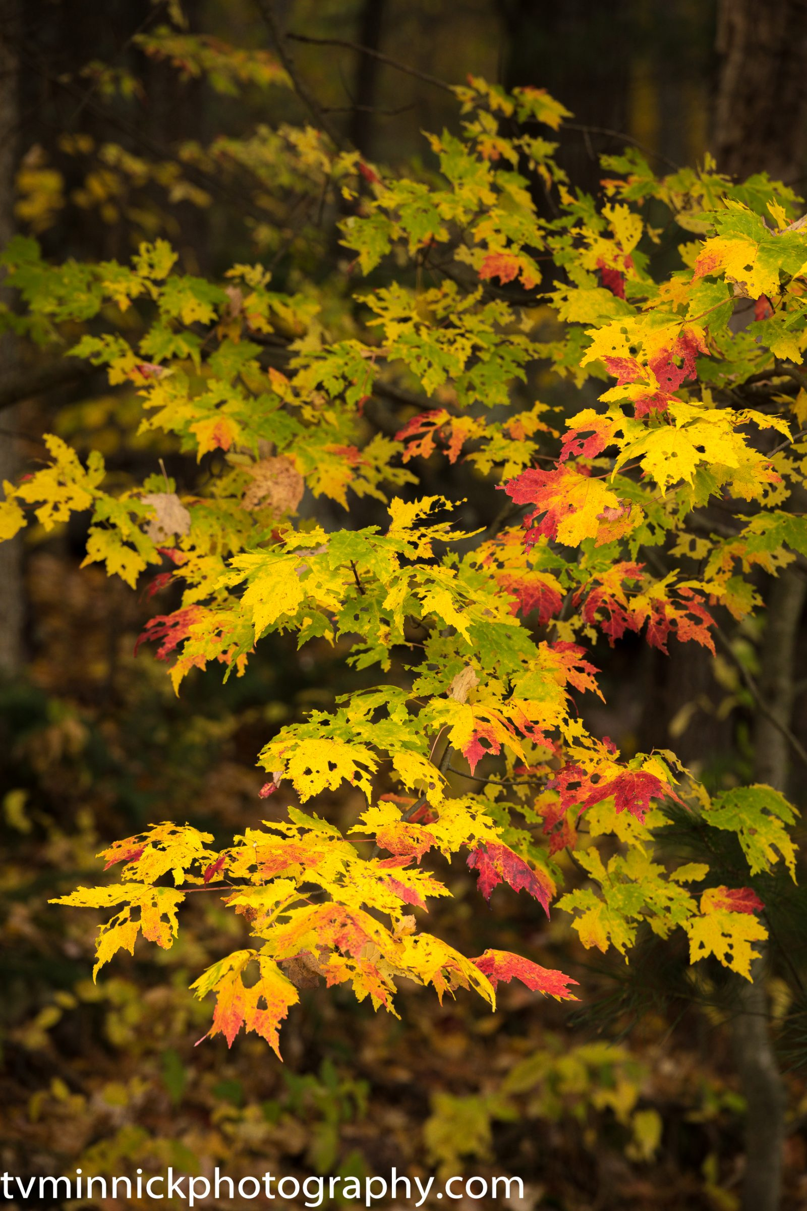 Changing Leaves of Autumn