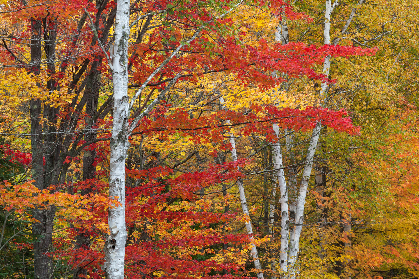 Northwoods Color