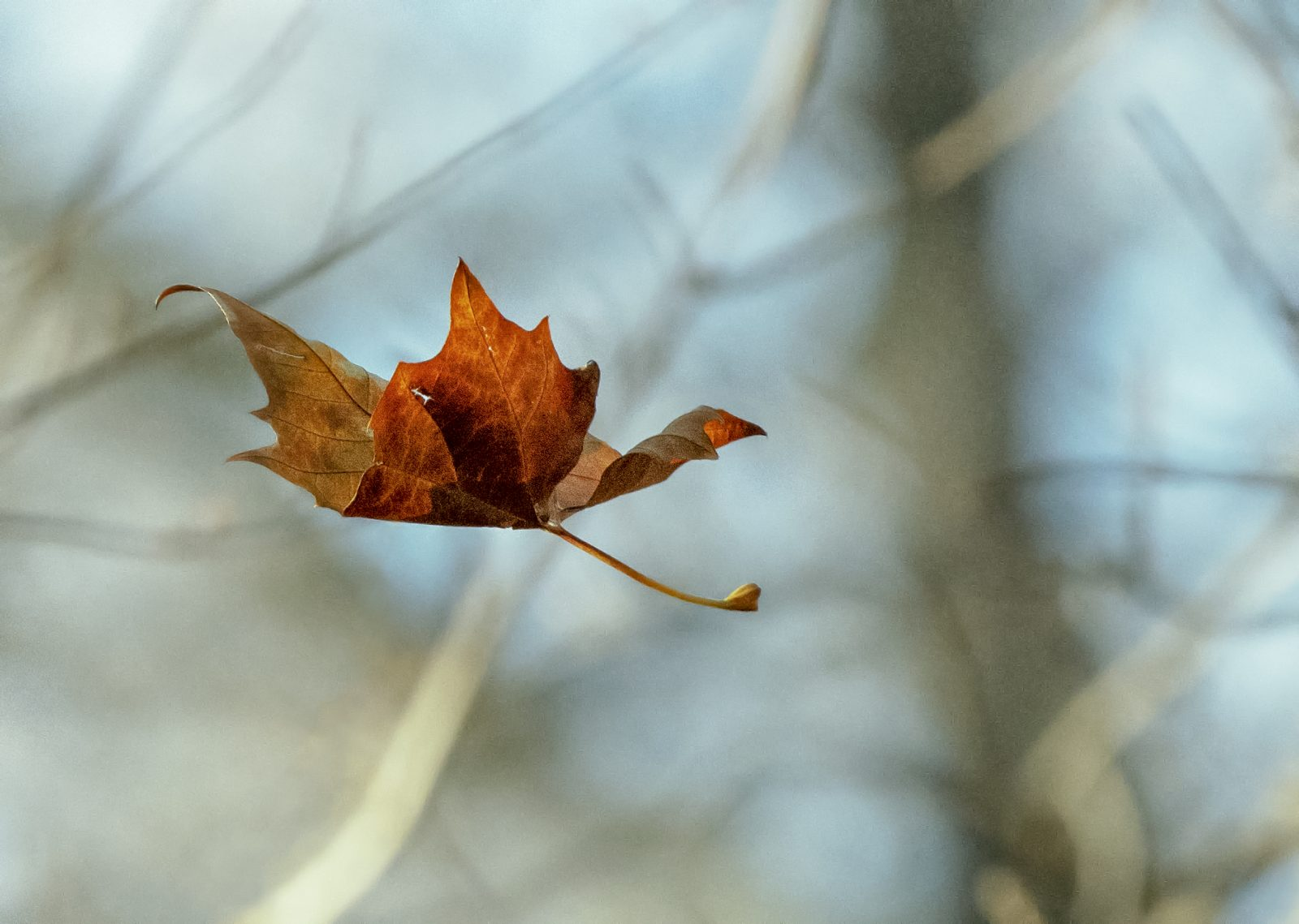 Making Beleaf….a falling leaf captured in time with a camera click