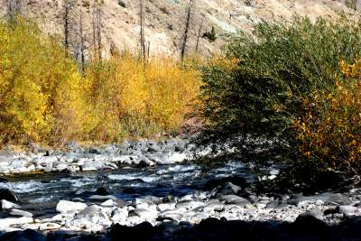 Fall Color on Creek