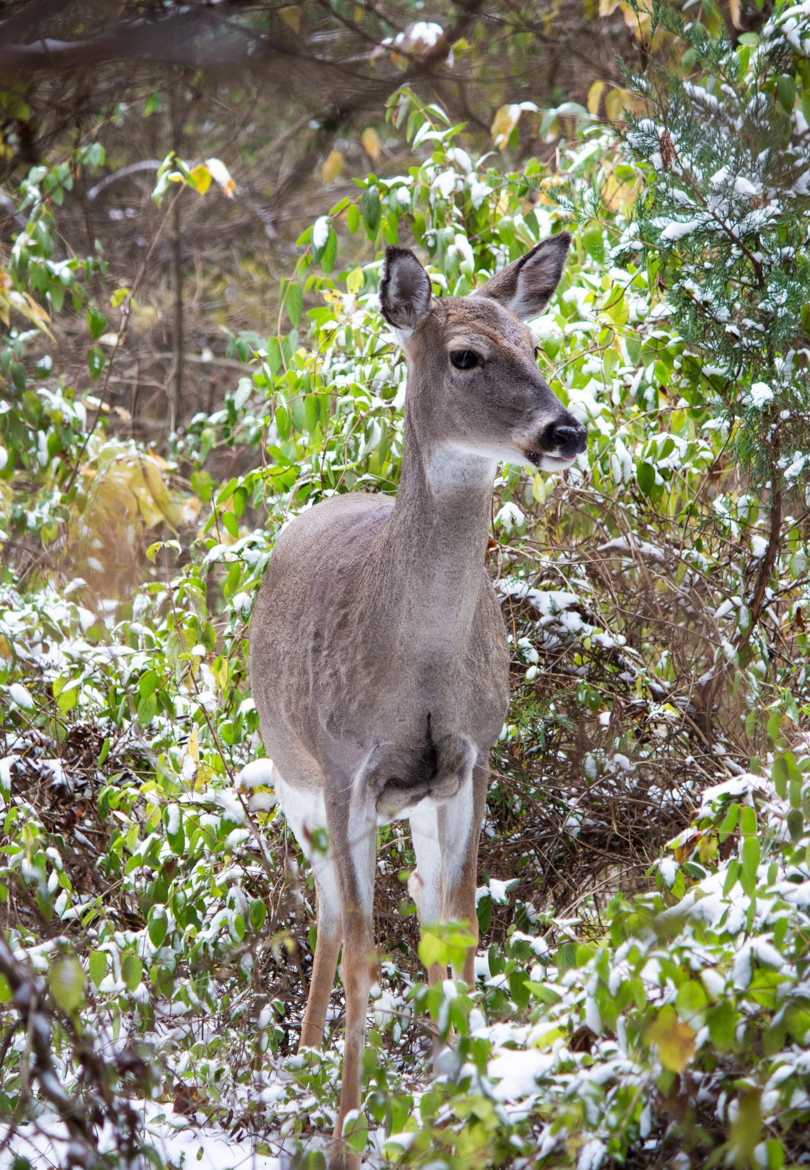 Deer in a Fall Winter