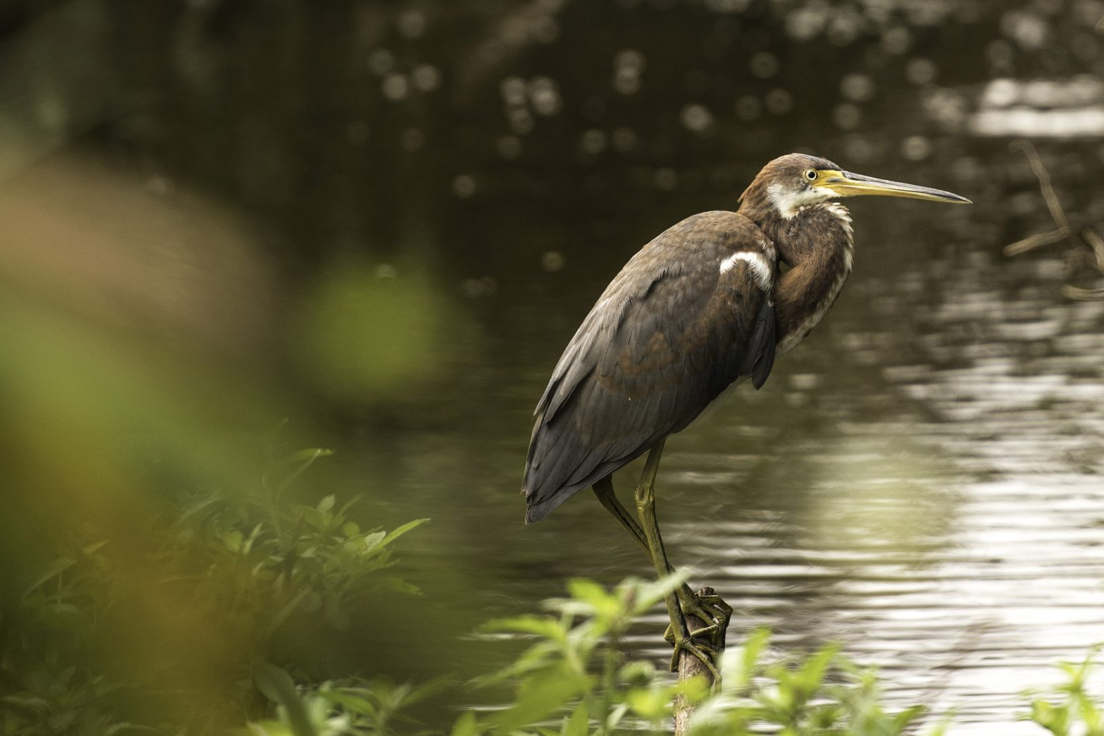 Afternoon Chillin' Heron
