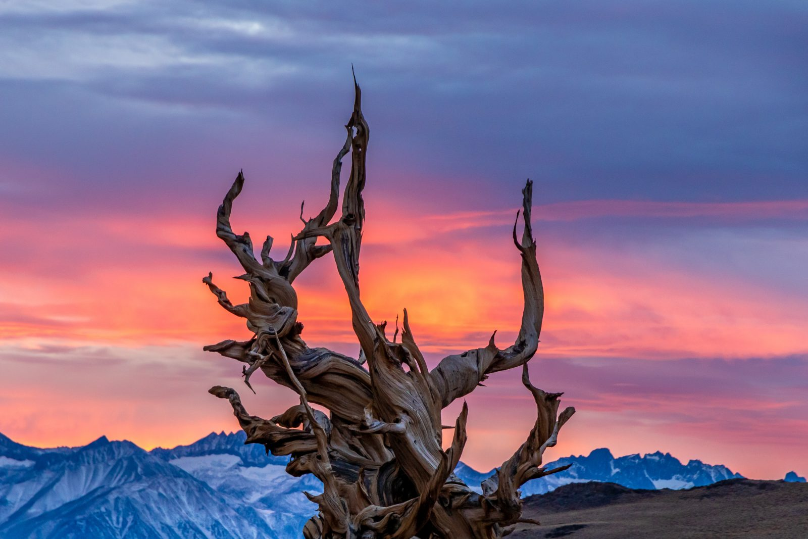 Sunset from The Bristlecone Pine Forest
